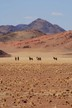 Oryx in the Damaraland desert