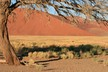 The rich colours of Sossusvlei
